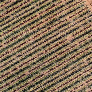 Aerial photo of a vineyard